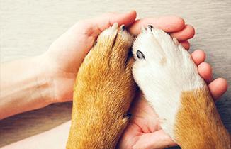 10 recomendaciones para cuidar las patitas de tu perro