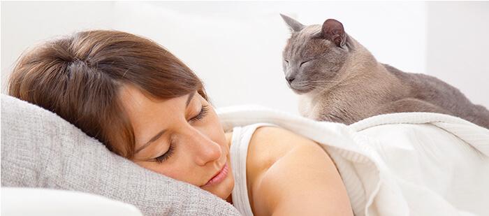Muchos gatos duermen en el vientre o encima de su dueño