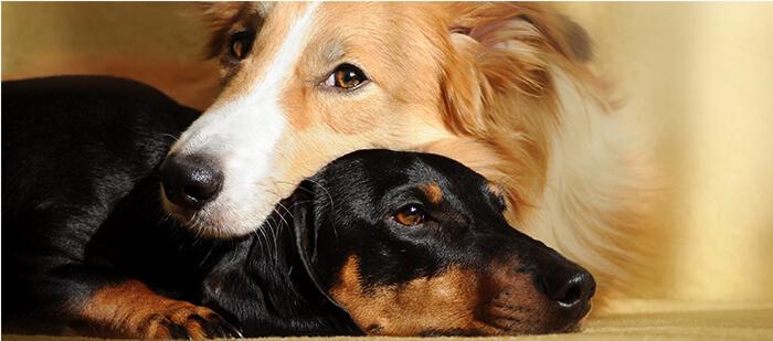 Tips para que tu peludo socialice con otros perritos
