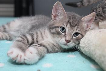 3 parásitos intestinales comunes en gatos y cómo evitarlos