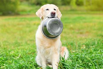 7 razones por las que tu perro puede perder el apetito