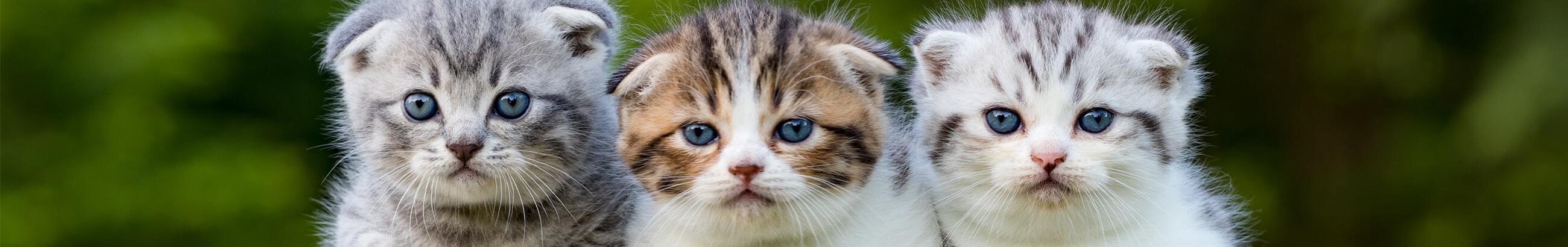 5 consejos para cuidar gatitos bebés
