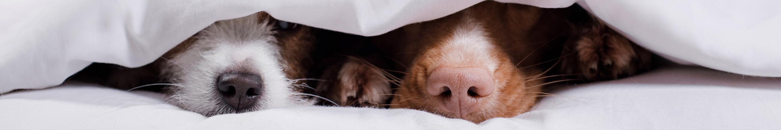 Todo lo que debes saber sobre la nariz de tu perrito