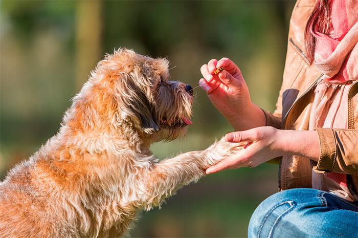 Premia a tu perro en el momento correcto