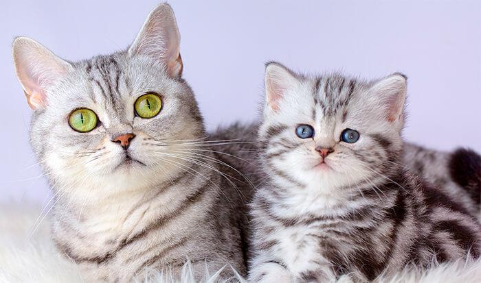 Diferencias nutricionales entre gatitos y gatos adultos