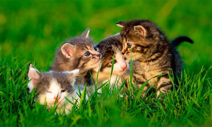 Gato-gato