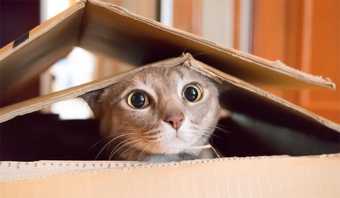 Gato inquisidor