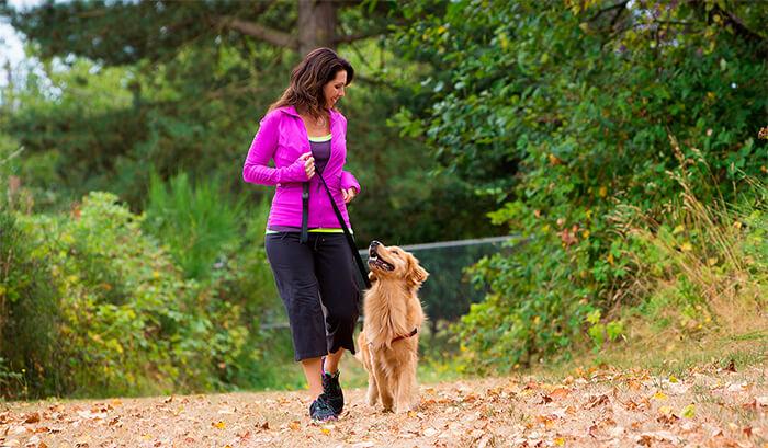 5 ejercicios con tu perro