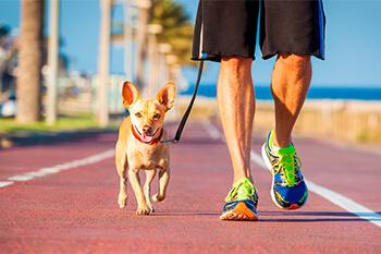 5 formas de ejercitarte con tu perro