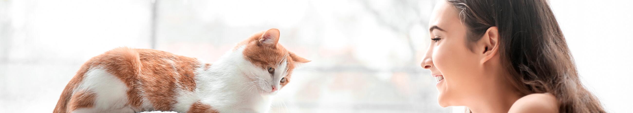 Top 10 de las razas de gato más tiernas y cariñosas