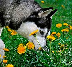 Cómo saber si tu perrito tiene alergias
