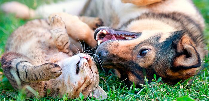 Con el tiempo tu perro y tu gato serán los mejores compañeros