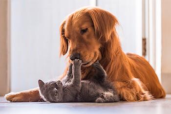 ¿Cómo lograr que tu perro acepte a tu nuevo gatito en la familia?