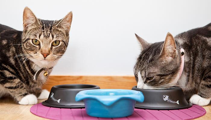 ¿Por qué mi gato no tiene apetito?