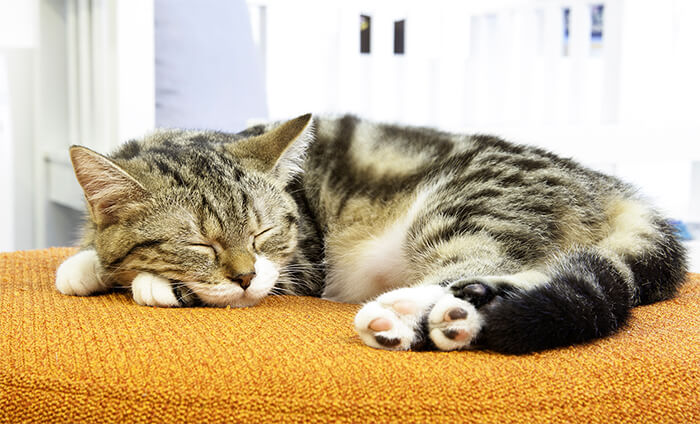 Síntomas de depresión en gatos