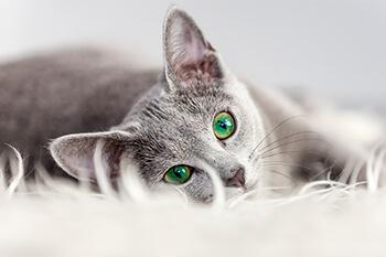 ¿Por qué mi gato está triste?