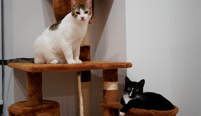 Hoteles para gatos
