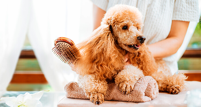 Una buena salud es el mejor regalo que le puedes dar a un perro