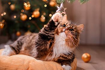 Cómo evitar que mi gato destruya la decoración navideña