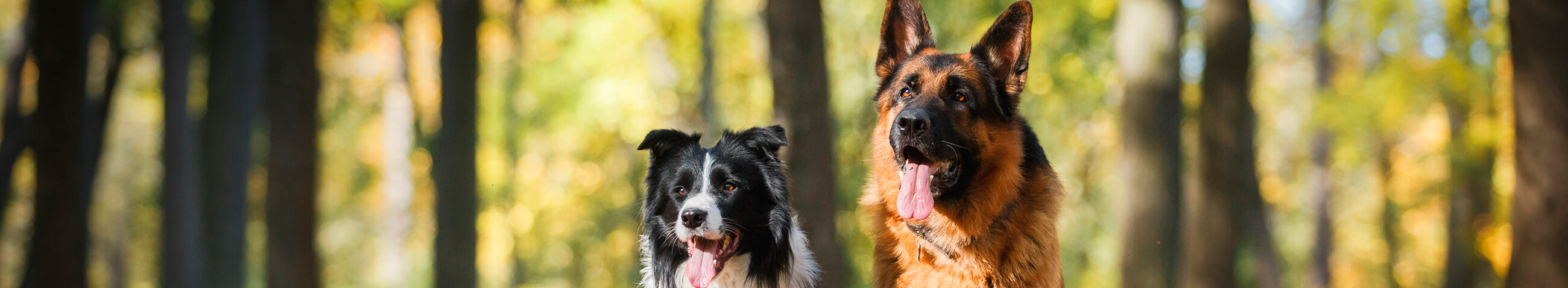 Cómo elegir tu perro ideal