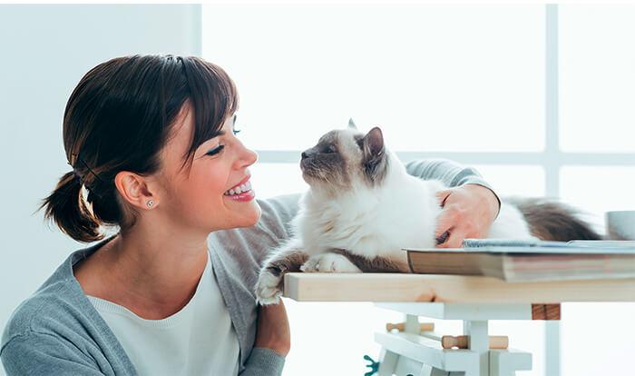 Qué hacer si mi gato es celoso