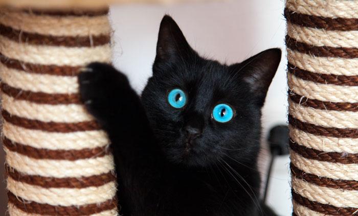 La naturaleza del gato