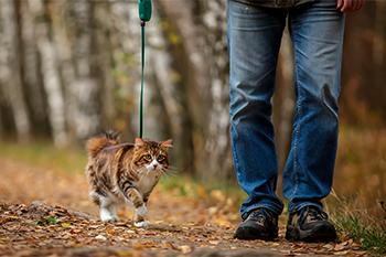 ¿Puedo salir a pasear con mi gato?