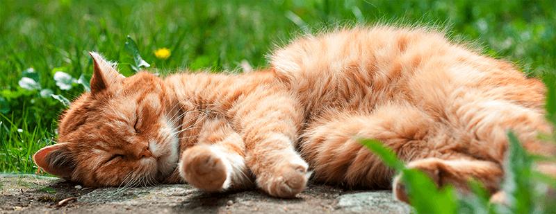 ¿Cómo saber la edad de mi gato?