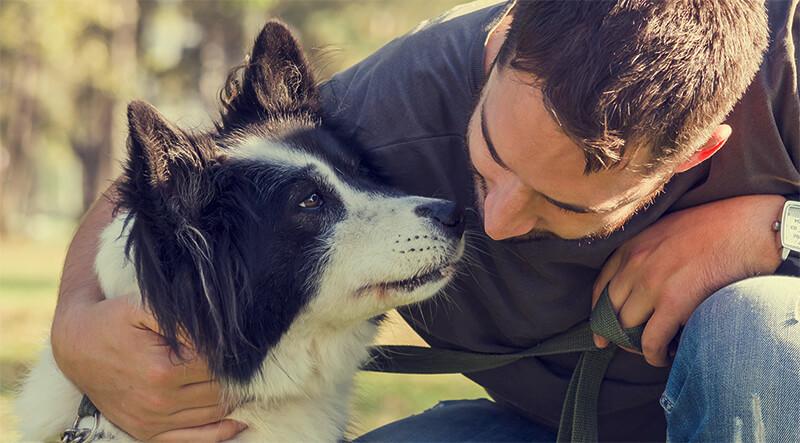 ¿Tu perro entiende lo que le dices?