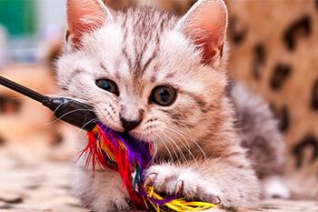 Los 5 mejores accesorios para tu gato