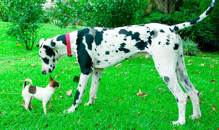 Los 4 perros más excepcionales