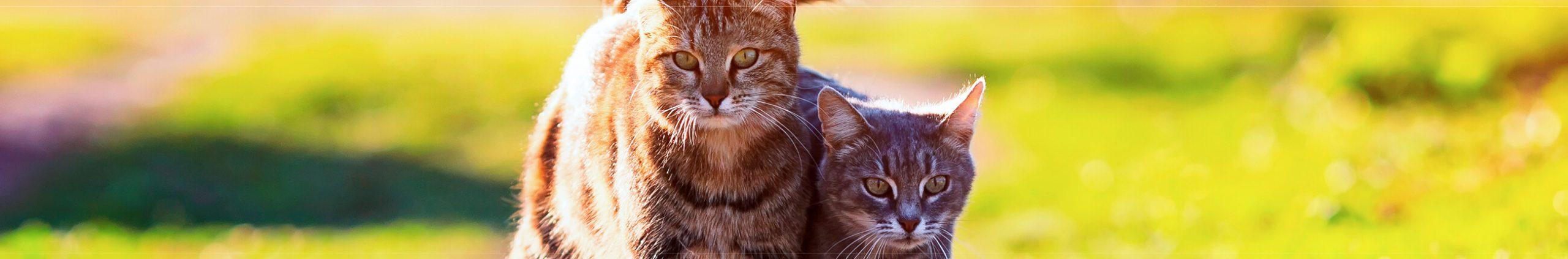 ¿Un segundo gato en casa? Recíbelo adecuadamente