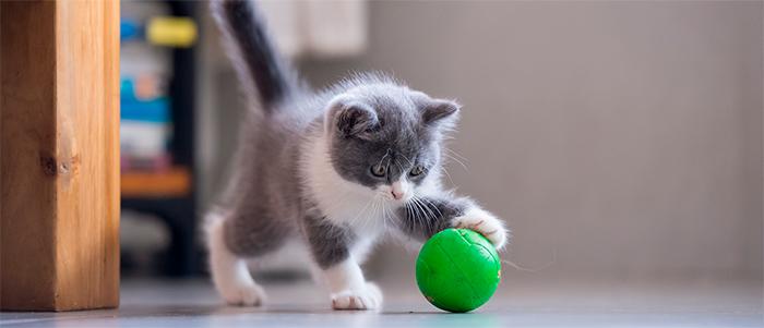 Actividades en casa con tu gatito