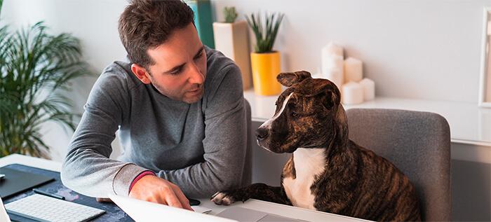 Evita la ansiedad en tu perro por la separación post confinamiento
